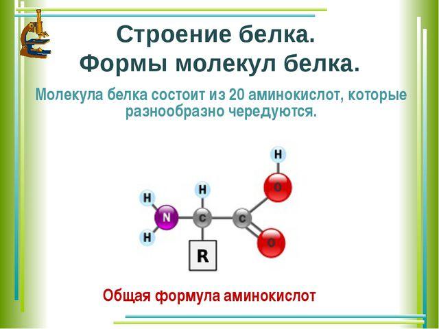 Строение белка. Формы молекул белка. Молекула белка состоит из 20 аминокислот...