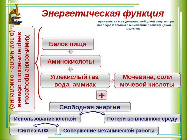 Энергетическая функция проявляется в выделении свободной энергии при последов...