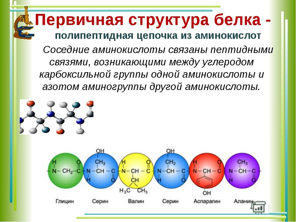 Первичная структура белка - полипептидная цепочка из аминокислот Соседние...