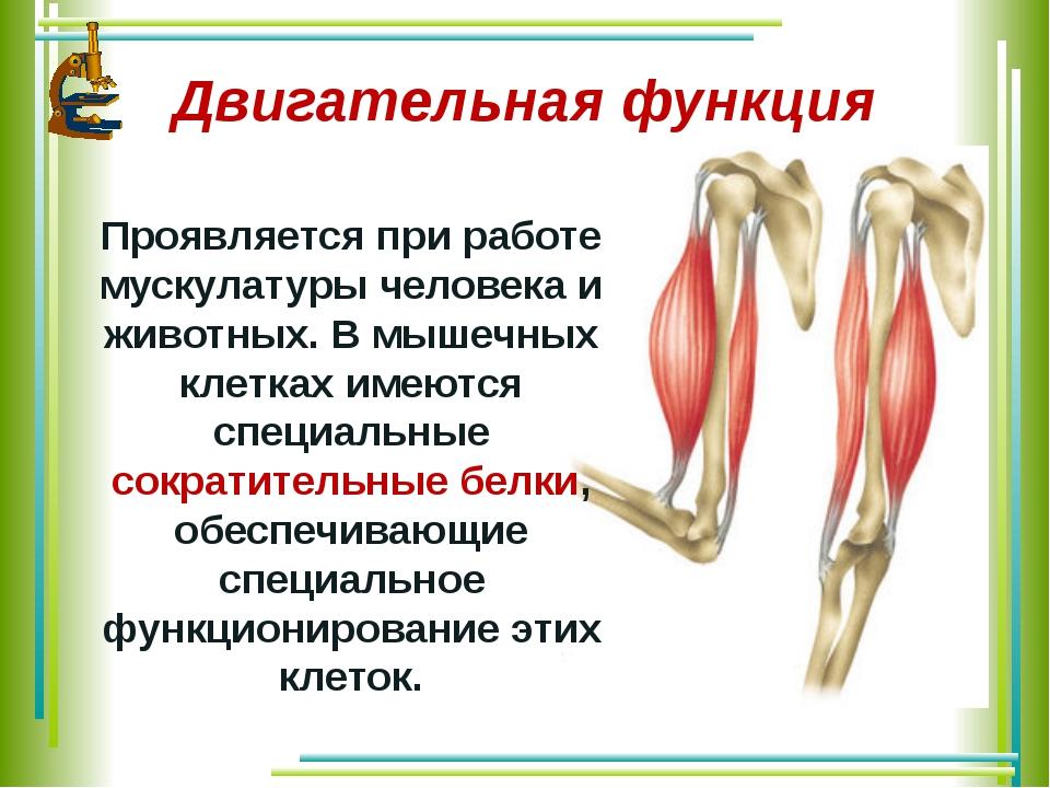 Двигательная функция Проявляется при работе мускулатуры человека и животных....