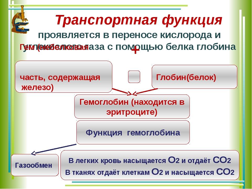Транспортная функция проявляется в переносe кислорода и углекислого газа с по...