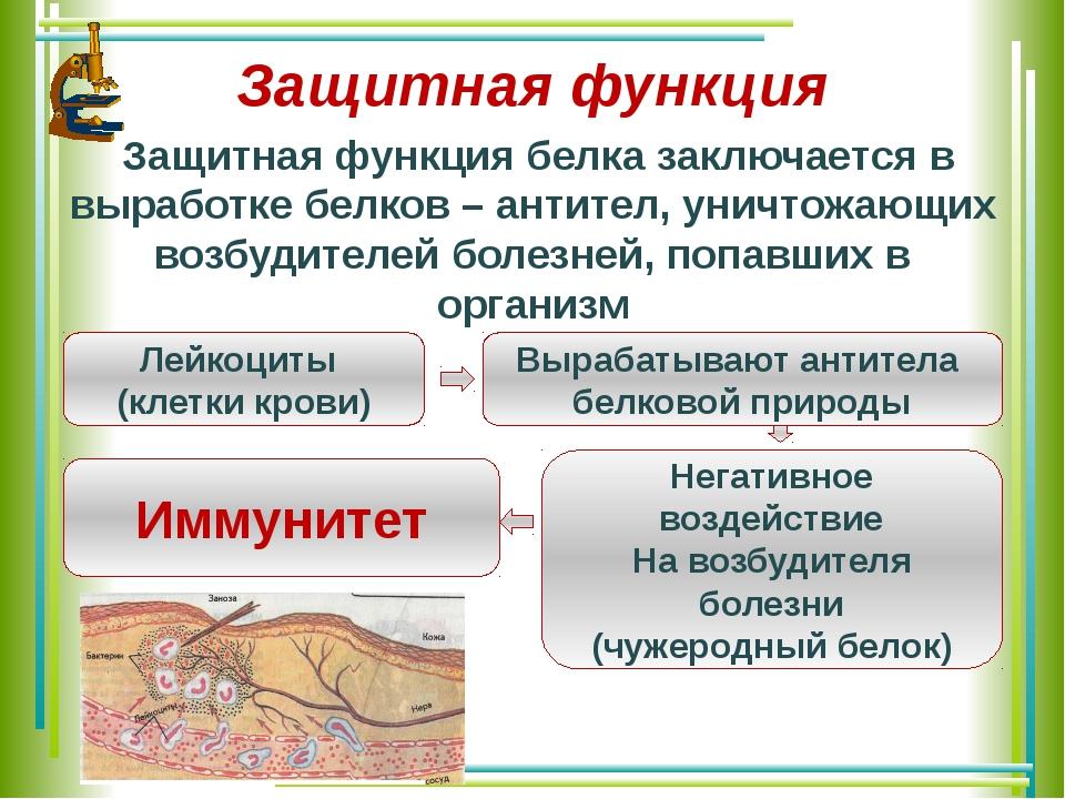 Защитная функция Защитная функция белка заключается в выработке белков – анти...