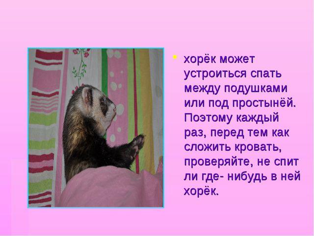 хорёк может устроиться спать между подушками или под простынёй. Поэтому кажды...