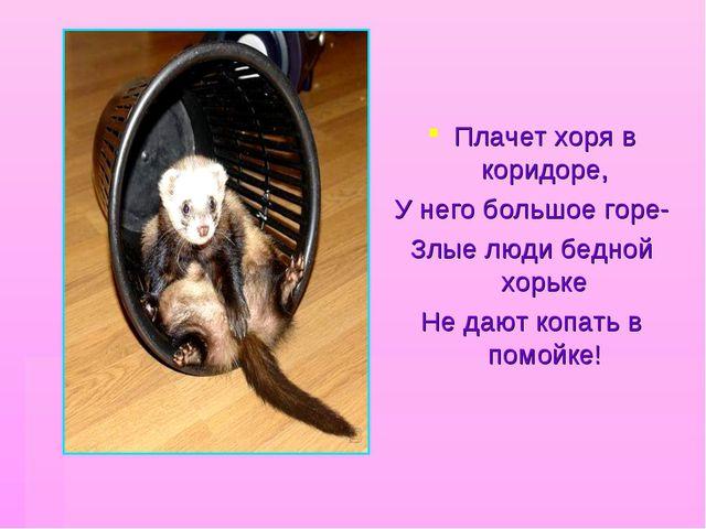 Плачет хоря в коридоре, У него большое горе- Злые люди бедной хорьке Не дают...