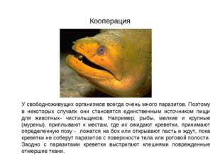 Кооперация У свободноживущих организмов всегда очень много паразитов. Поэтом
