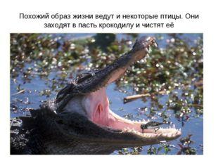 Похожий образ жизни ведут и некоторые птицы. Они заходят в пасть крокодилу и