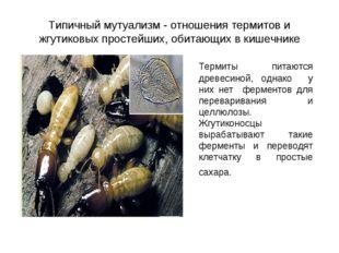 Типичный мутуализм - отношения термитов и жгутиковых простейших, обитающих в