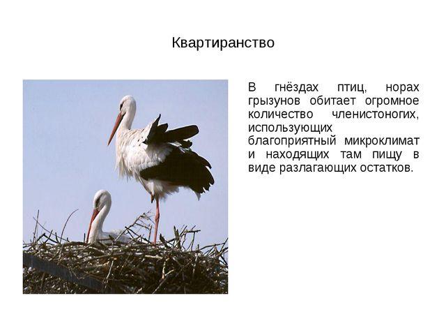 Квартиранство В гнёздах птиц, норах грызунов обитает огромное количество чле...
