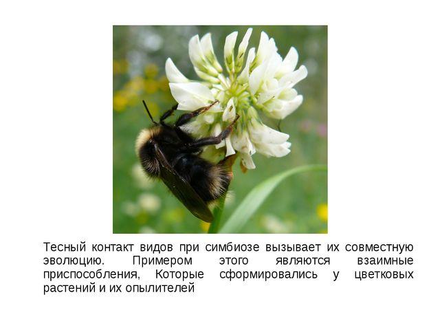 Тесный контакт видов при симбиозе вызывает их совместную эволюцию. Примером...