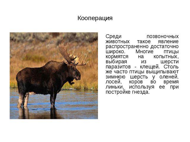 Кооперация Среди позвоночных животных такое явление распространенно достаточ...