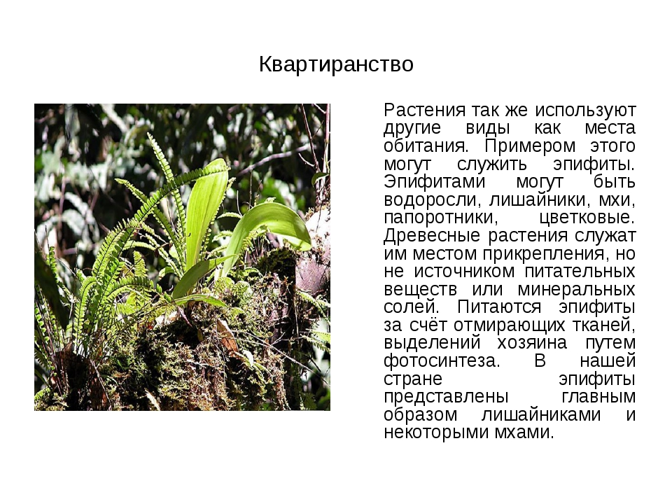 Квартиранство  Растения так же используют другие виды как места обитания. П...
