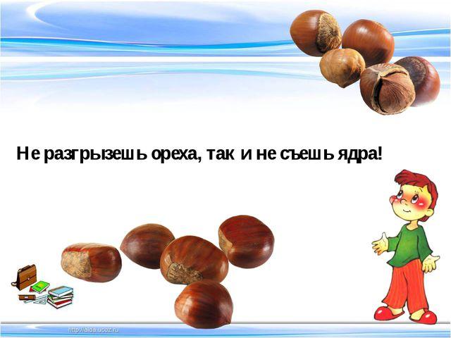 Не разгрызешь ореха, так и не съешь ядра!