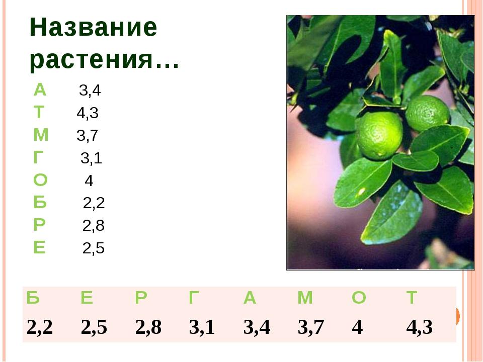 Название растения… А 3,4 Т 4,3 М 3,7 Г 3,1 О 4 Б 2,2 Р 2,8 Е 2,5 Б Е Р Г А М...