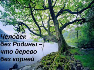 Человек без Родины – что дерево без корней