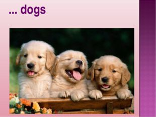 ... dogs
