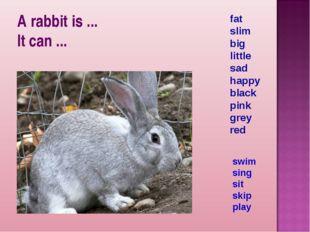 A rabbit is ... It can ... fat slim big little sad happy black pink grey red