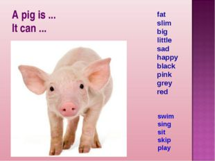 A pig is ... It can ... fat slim big little sad happy black pink grey red swi