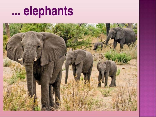 ... elephants