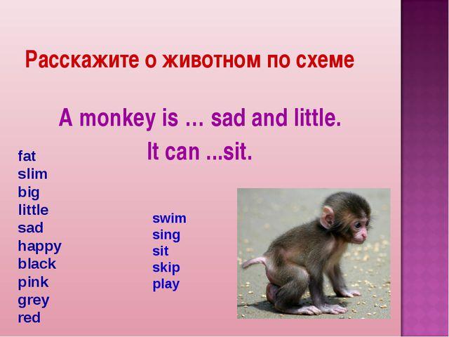 Расскажите о животном по схеме A monkey is … sad and little. It can ...sit. f...