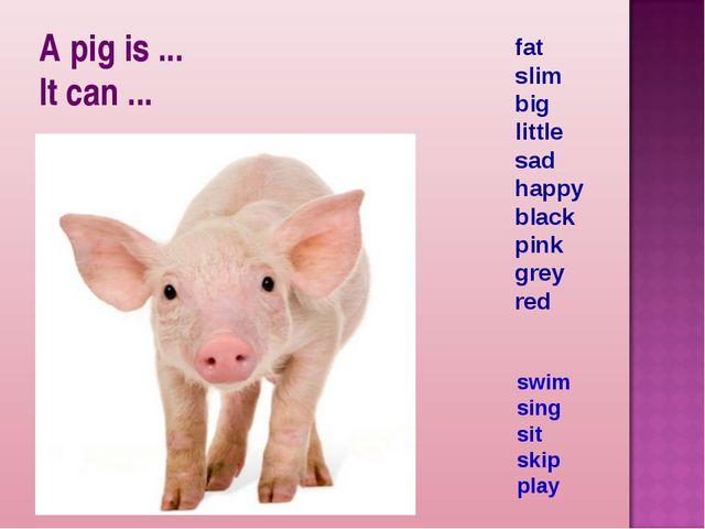 A pig is ... It can ... fat slim big little sad happy black pink grey red swi...