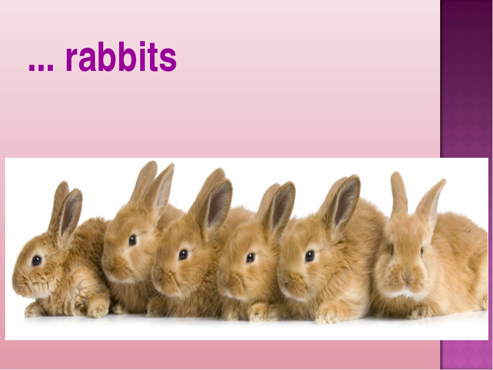 ... rabbits