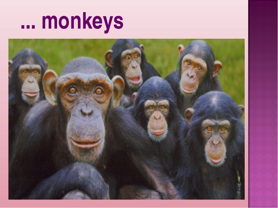 ... monkeys
