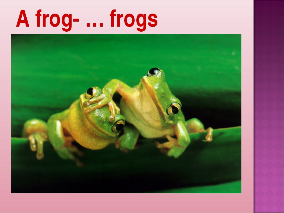 A frog- … frogs