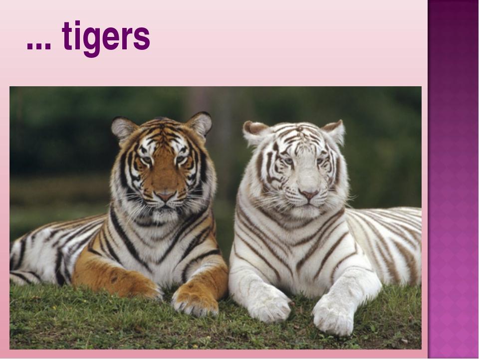 ... tigers
