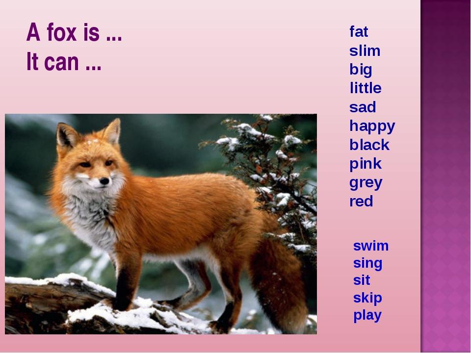 A fox is ... It can ... fat slim big little sad happy black pink grey red swi...