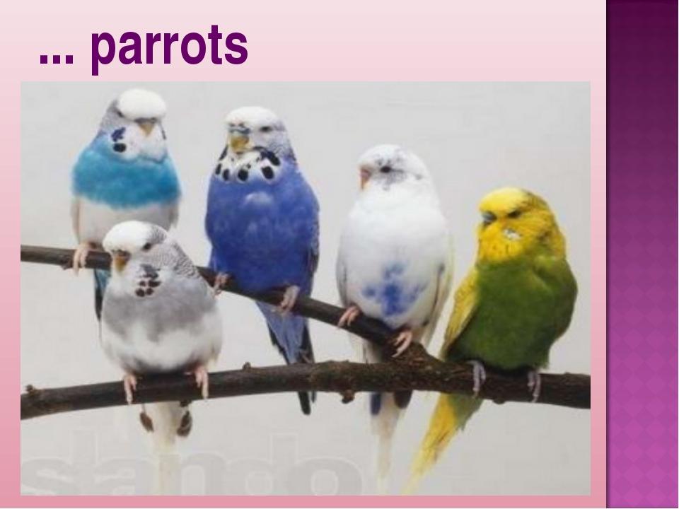 ... parrots