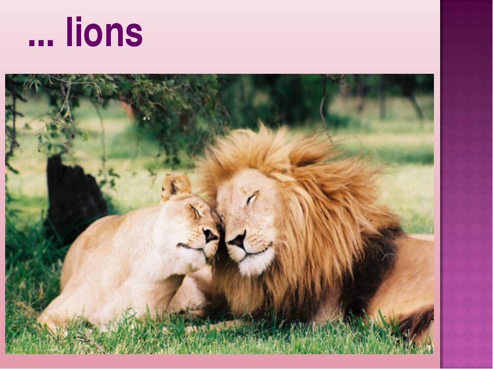 ... lions