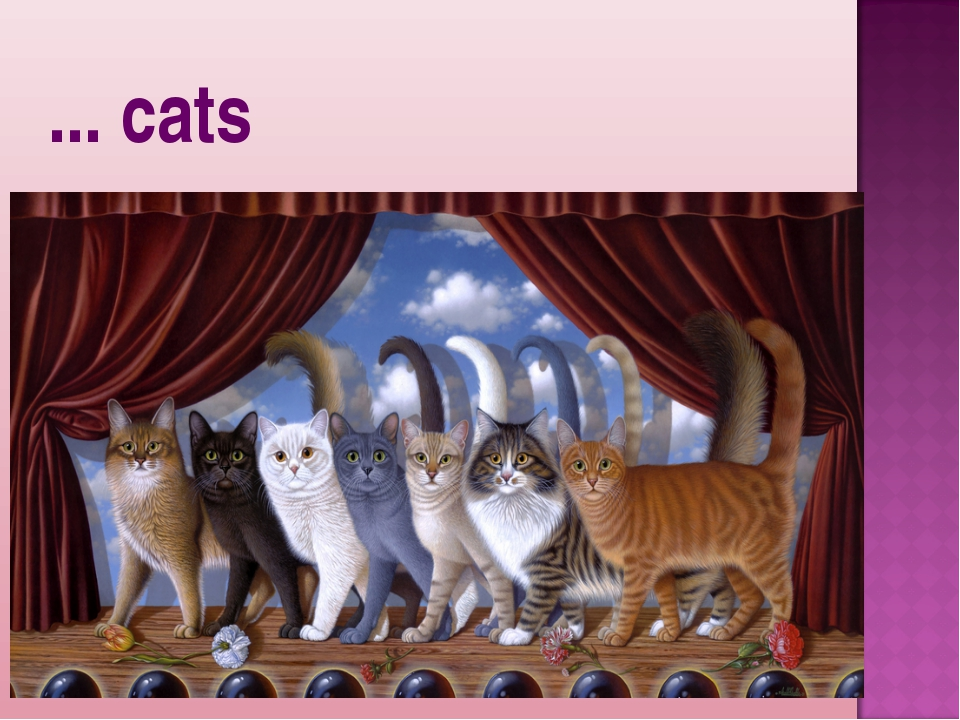 ... cats