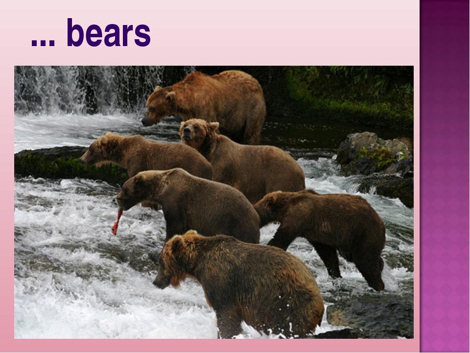 ... bears