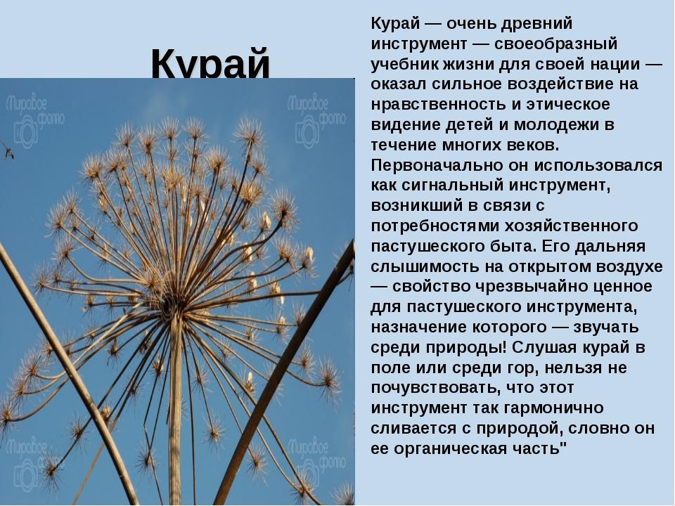 Курай Курай — очень древний инструмент — своеобразный учебник жизни для своей...