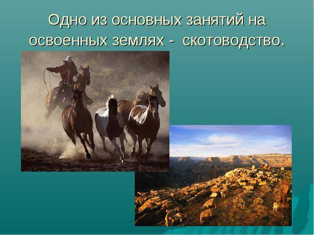 Одно из основных занятий на освоенных землях - скотоводство.