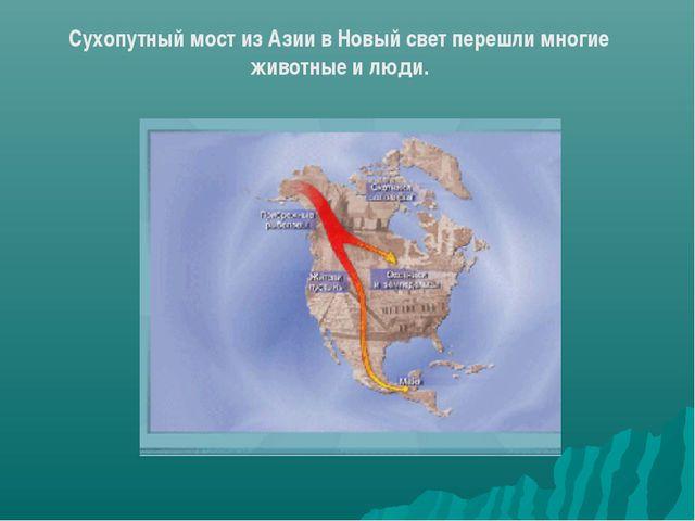 Сухопутный мост из Азии в Новый свет перешли многие животные и люди.