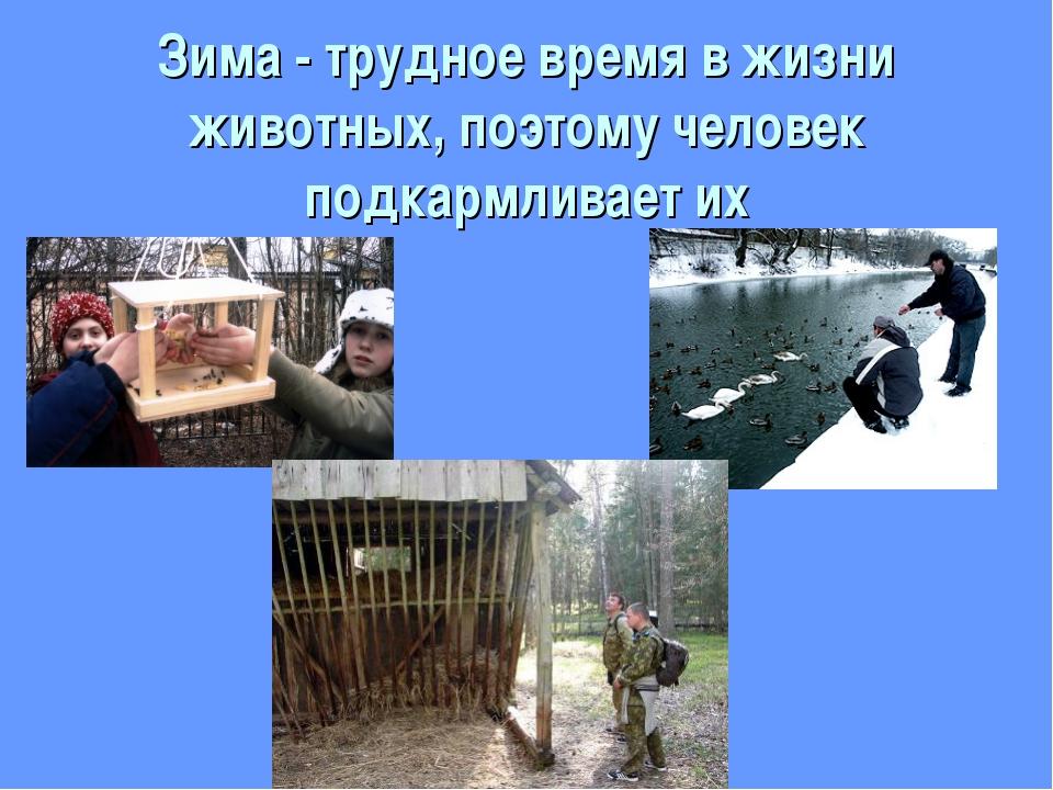 Зима - трудное время в жизни животных, поэтому человек подкармливает их