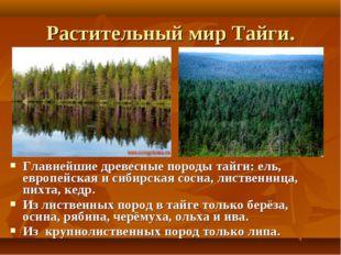 Растительный мир Тайги. Главнейшие древесные породы тайги: ель, европейская и