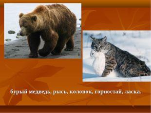 бурый медведь, рысь, колонок, горностай, ласка.
