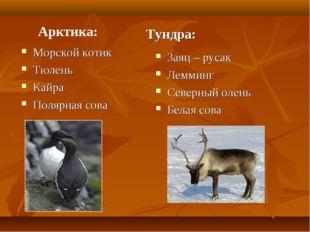Арктика: Морской котик Тюлень Кайра Полярная сова Тундра: Заяц – русак Лемми