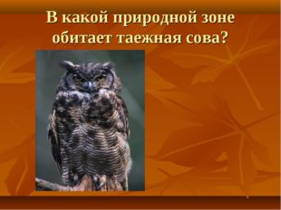 В какой природной зоне обитает таежная сова?