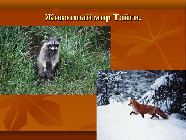 Животный мир Тайги.