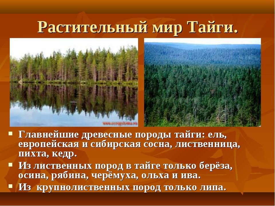 Растительный мир Тайги. Главнейшие древесные породы тайги: ель, европейская и...