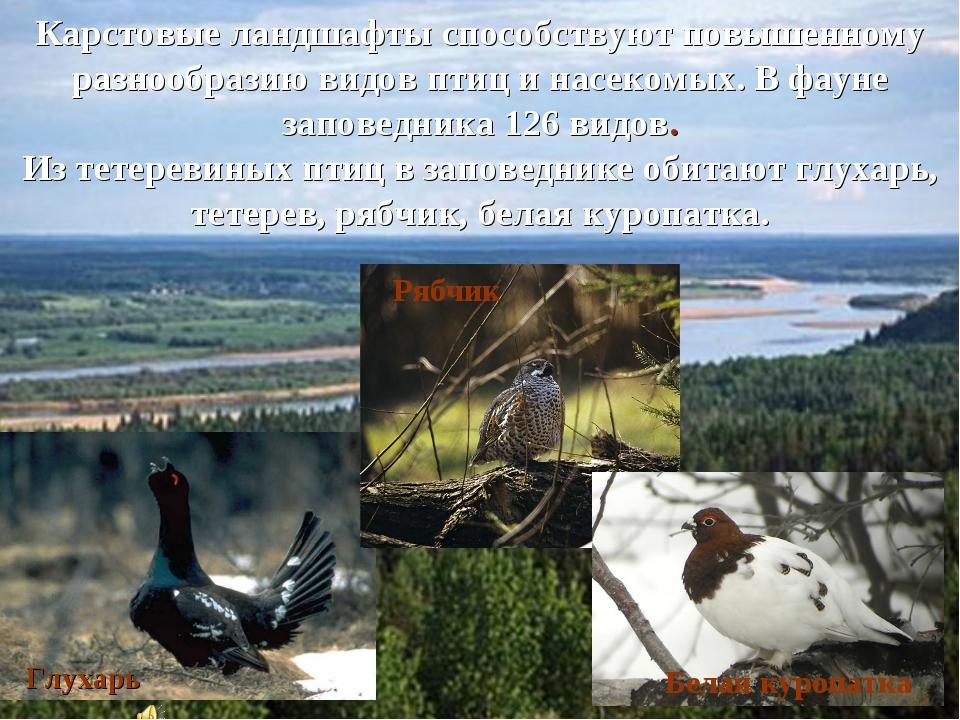 Карстовые ландшафты способствуют повышенному разнообразию видов птиц и насеко...