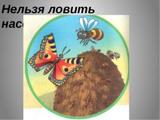 Нельзя ловить насекомых.