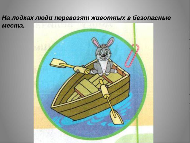 На лодках люди перевозят животных в безопасные места.