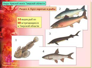 Виды Красной книги Тверской области 14 видов рыб из 60 встречающихся в Тверск