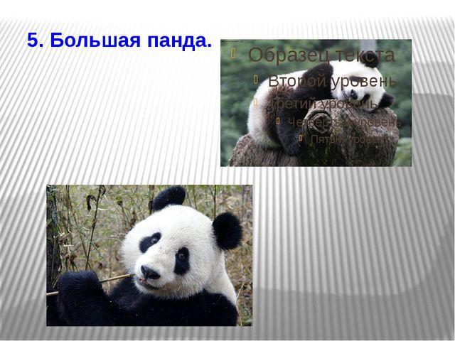 5. Большая панда.