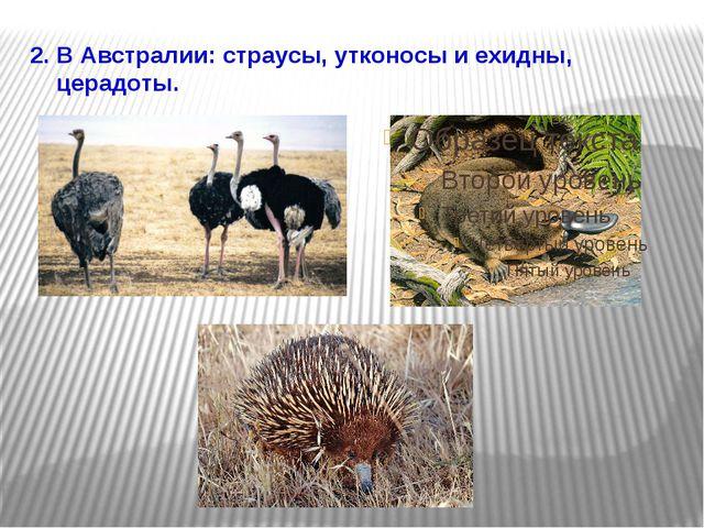 2. В Австралии: страусы, утконосы и ехидны, церадоты.