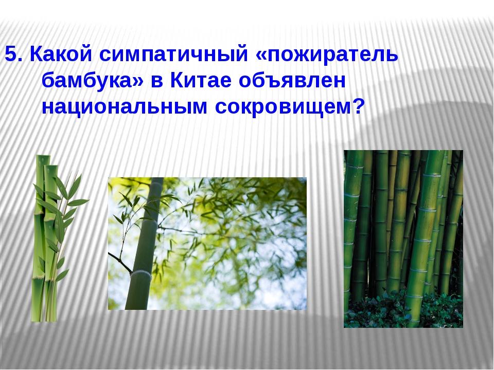 5. Какой симпатичный «пожиратель бамбука» в Китае объявлен национальным сокро...